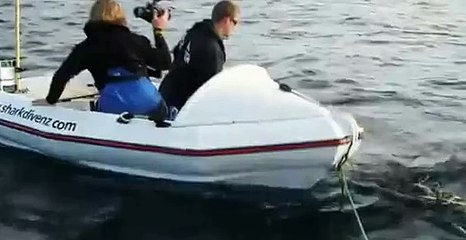 The terrifying moment a HUGE Great White shark attacks New Zealand film crew in tiny boat