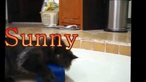 The Funny Persian Cat !! Playful Cat loves empty can so much!