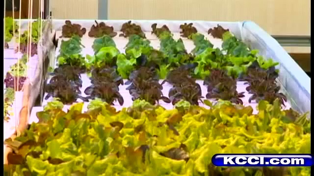 Tour New Iowa Aquaponics Farm