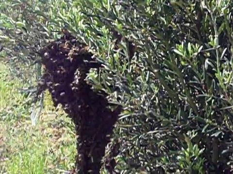 Arılar bu kez kaçamadı 2