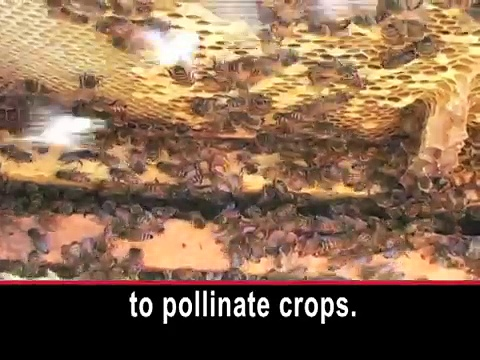 What You Can Do to Help Bees