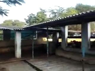 Krishna reddy dairy farm, Nadargul village, one of the best dairy farms in Hyderabad