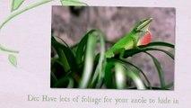 green anole food ,  green anole ,  green anole lizard ,  green anole care sheet ,  green anole facts