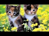 Cute Kittens Happy 2015 - Cute Kittens Video Clip: Best Compilation The Most Beautiful Pets ! ?