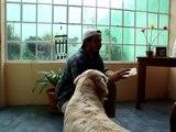 Como Cargar el Clicker, Entrena a tu Perro y enseñale trucos con el Clicker