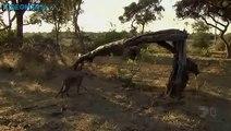 Ένα από τα πιο υπέροχα βίντεο του National Geographic. (Greek subs)