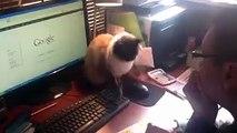 Quand mon chat ne veut pas que je touche la souris