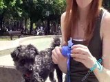 Dog Toys and Gadgets