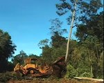 Death in the Highlands - Vietnam implements deforestation and illegal logging