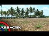 TV Patrol: N. Cotabato magdedeklara ng state of calamity dahil sa init; Iloilo, kulang na sa tubig