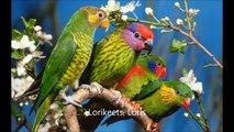 Pajaros y otras aves de Colores, Tropicales, Exoticas. y Variadas.
