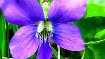Spring Wild flowers. Amazing nature