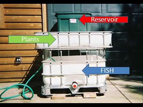 How to build a basic Aquaponics System