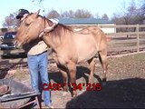 Healing severe wounds in horses, injury, bandage, vet