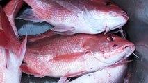 Gulf Charter Fisherman hosts fishery research trip