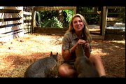 Life's A Zoo with Mallory Clark webisode three: Patagonian Cavy