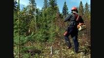 Bien vivre la forêt: Chapitre 6: L'évolution d'une foret