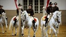 NATURE   The World Famous Lipizzaner Stallions   Legendary White Stallions   PBS