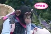 Çogu  insanın köpekten korktuğu için döndüğü bu yolda maymun bize iyi bir ders veriyor maymun ve köpek