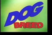 The Love of Dogs-Shetland Sheepdog - Herding Dogs