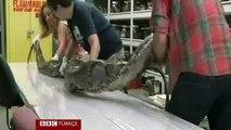 Florida'nın en uzun piton yılanı bulundu