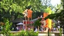 Alles neu : Tierpark Hamm ( Tiere, Zoo,Hamm)  Imagefilm, Tigers train to fight