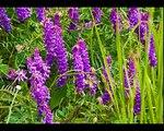 Sinfonia di fiori e colori. Fiorita al piano di Castelluccio