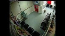 Australie: un koala s'invite aux urgences d'un hôpital