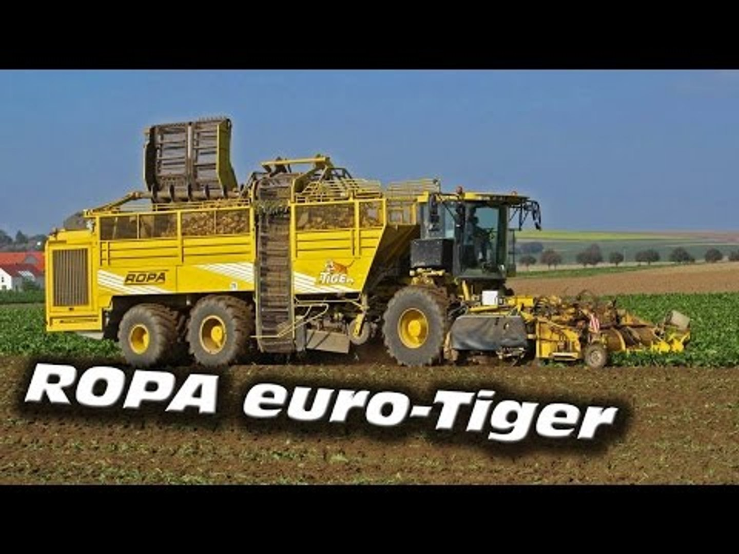 MEGA MACHINE SUGAR BEET HARVESTER ❢ ROPA EURO TIGER ++ HARVESTING ACTION