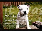 Staffordshire Bull Terriers against Breed Discrimination