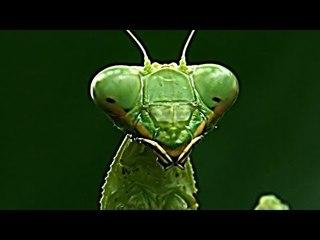 Mantis - Full Length Documentary