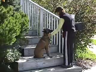 Training your dog the Collar Grab