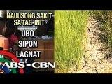 Bandila: Beware of summer diseases; El Nino drying up rice and corn fields