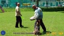 Vollschutzjacke, Bite suit for police dog training Julius-K9®,  Code: 101VO