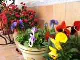 WALTZ OF THE FLOWERS. TCHAIKOVSKY. VALS DE LAS FLORES. Y  SPRING. VIVALDI. PRIMAVERA