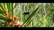 FLOWERS & SMALL BUGS - FLEURS & P'TITES BETES