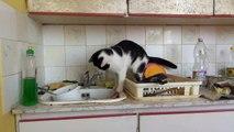 Cat drinks tap water - again!