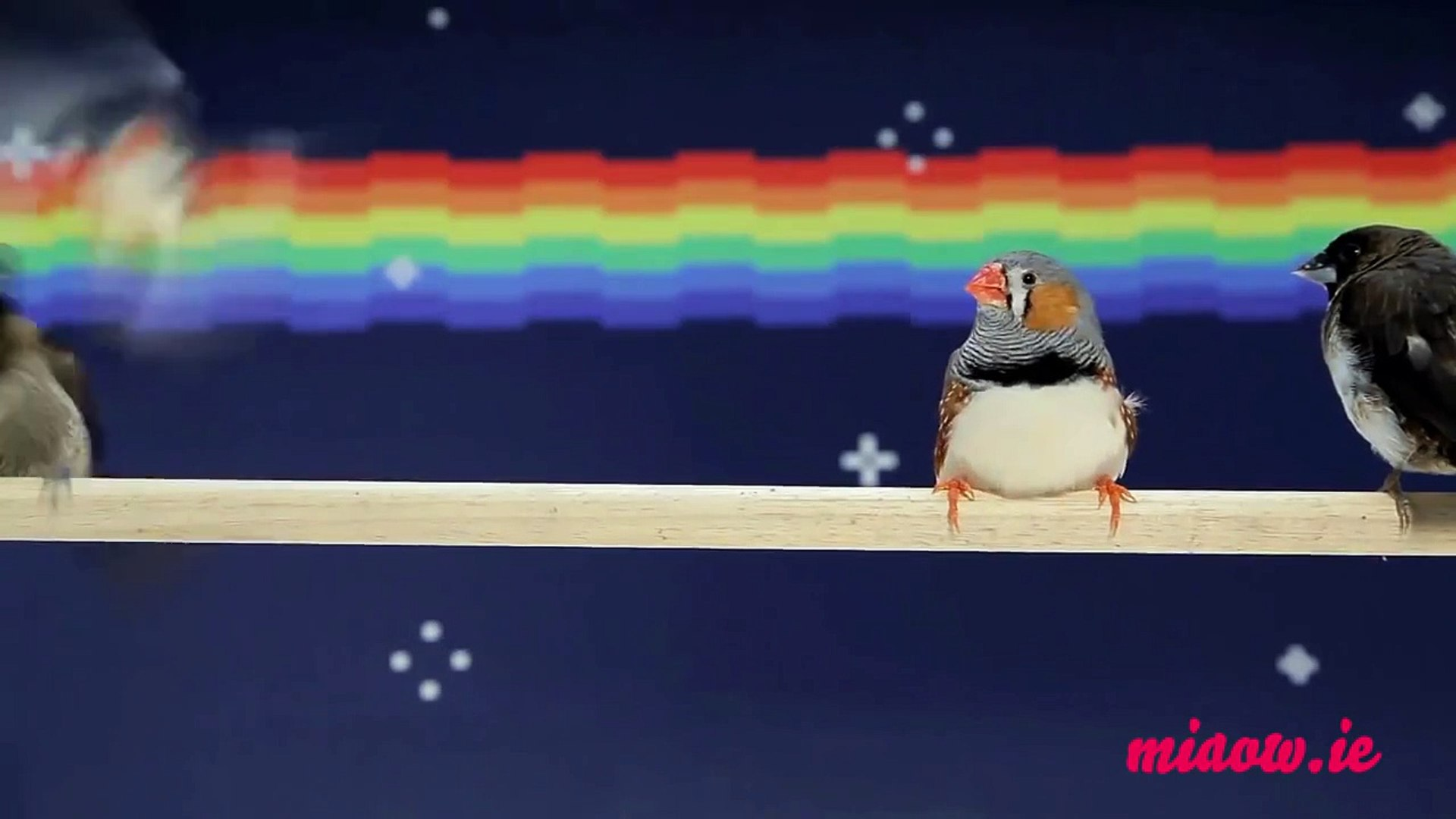 Telekat: video for cats to watch - birds from outer space!