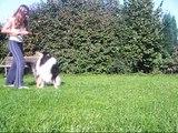 un chat qui obei et des chiens qui danse