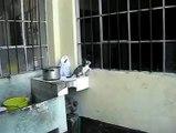 Mira cómo esta gata rescata a su cachorro por una ventana