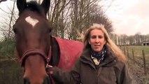 Rencontre entre un cheval et un ami de longue date