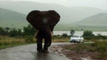 Big Big Big Elephant Walks By Our Car on Safari
