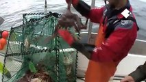 King crabbing in Northern Norway / Königskrabbenfang im Norden Norwegens