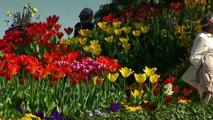 Insel Mainau Imagefilm (Frühling)