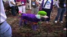 Groom Expo 2009 Creative Grooming - Additional Footage