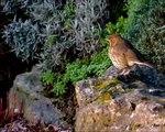 Relaxation : ballade sur chants et images d' oiseaux