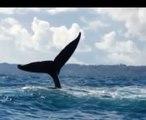 Safari baleines à l'île Ste Marie