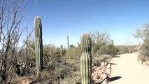 Arizona Sonora Desert Museum, Coyote, Cougar, Prairie Dogs  Desert Animals Tucson Arizona U.S.A