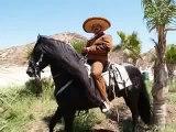 CABALLOS ESPANOLES, CABALLOS BAILADORES, CABALLOS %100 ANDALUZ, CABALLO BAILANDO, PRE HORSES