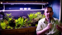 Aquascaping for beginners : How to plant carpet plants - video